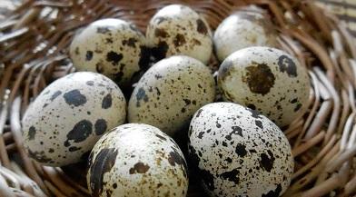 Перепелиные яйца натощак - советы врачей и диетологов
