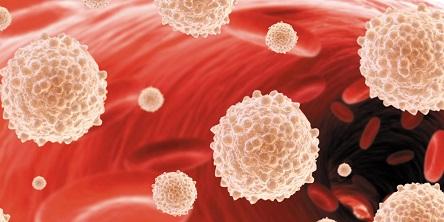 Когда повышаются лейкоциты в крови