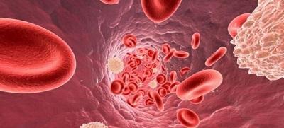 Лейкоциты в крови: виды, норма. Повышенный или пониженный уровень лейкоцитов в крови: причины — как привести в норму?
