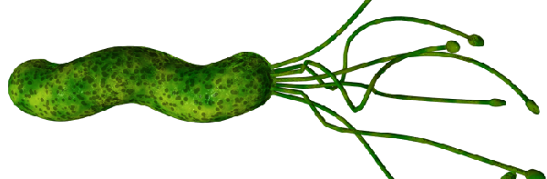 Хилак бактерии в желудке симптомы лечение